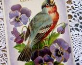 Antique Postcard, Vintage Postard, Bird Postcard, Paper Ephemera, Pansy