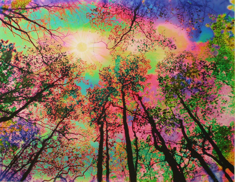20 fantasy colorful tree - photo #18