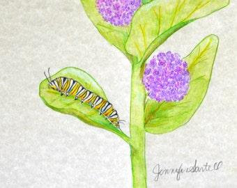 Monarch and Milkweed Caterpillar 5x7