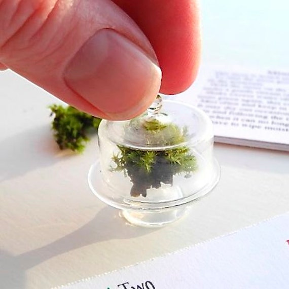 miniature moss garden terrarium kit with glass cloche with. Black Bedroom Furniture Sets. Home Design Ideas