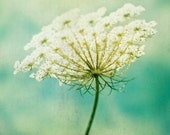 Nature Photography, Queen Annes Lace Photograph, turquoise green color sky, wall hanging, wall art nature photography - 8x10
