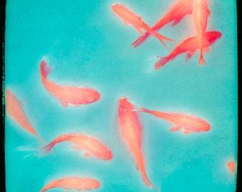 Goldfish, Vibrant Orange Turquoise, Aquamarine, Color Art Photography, Wall Decor, Wall Art signed Print