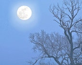 Blue Moon Photo -Bare Tree -Night Sky Photography -Full Moon -Gift Under 20 -Blue Nature Decor -Square Photo -Colorado Fine Art Photography