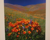 Limited Edition CALIFORNIA SPRING Wildflower Photographic Print by Wayne Green