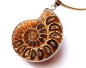 Pendant - Ammonite by Schneider Gallery
