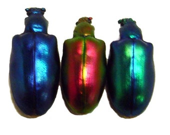 Metallic Jewel Real Framed Rainbow Leaf Beetle Set 8126