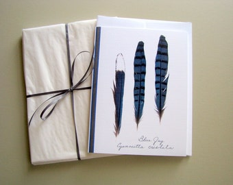 Blue Jay feathers, feathers greeting card, card for bird watcher, minimalist, nature, no.04