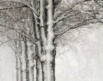 Winter Trees, Snow, Brown and White, Woodland Art, Nature, Landscape, Fine Art Photography, 8X10 Mat, Ready to Frame, Wall Art