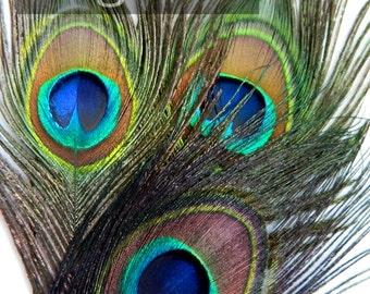 NATURAL Peacock Feather Eyes (JUMBO)(12 Feathers) for  appliques, boutonniere, invitations,bouquets and fascinators