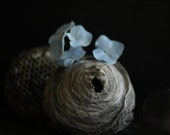 Wasp Nest Dutch Inspired Still Life Photography  Hydrangea  and Wasp Nest 8x10 - lucysnowephotography