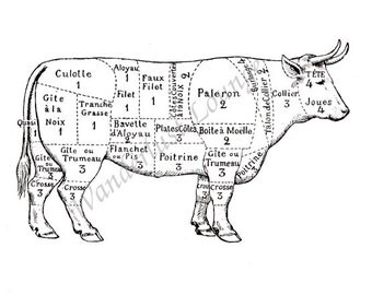 Instant Download  French Cow Cuts of Beef 025