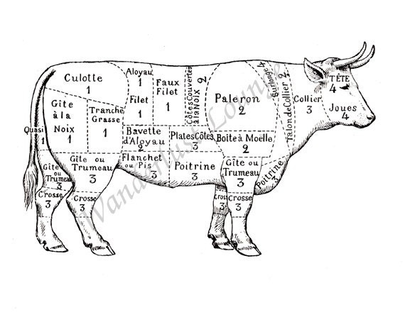 Beef Rib Diagram additionally Beef Cattle Working Facility Designs moreover Ch3 0 furthermore Instant Download French Cow Cuts Of Beef as well Are There Birds With Knees Instead Of Elbows. on from cow meat diagram