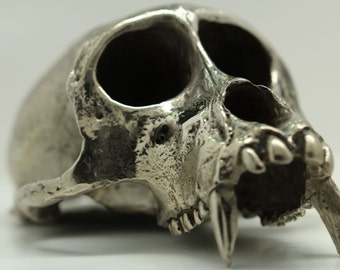 Monkey Skull, Rhesus Macaque Life-Cast, Purified Recycled White Bronze (Made in NYC)