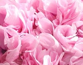 Poppy, Giant Peony Poppy Mix Seeds - Luxurious Peony-Like Flowers in Various Colors