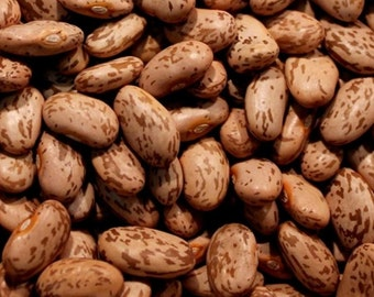 Beans, Organic Agate Pinto Beans - Delicious Duo Purpose Bush Beans Easy to Grow Bush and Dry Beans