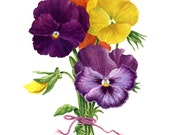 "Bouquet of Lushes Pansies, Print 8""x10"""