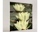 "Custom Order 24"" x 24"" Canvas - WATER LILIES - plus Free 24"" x 24"" Canvas"