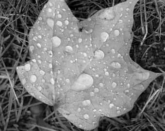 Rain on Maple Leaf,  black and white photo, wall art, home decor, nature photo, office art, contemporary art, modern