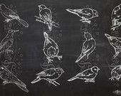 Sketchy Birds Photoshop brushes - High Res