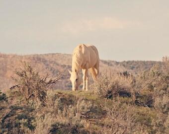 Desert Palomino Horse Photograph, Desert Landscape Art, Equine Art