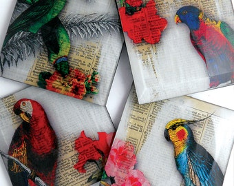 Parrot Dictionary Glass Coaster Set from Upcycled Dictionary page book art - WilD WorDz Collection-  -TropIcanA