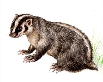 Original 10X8 Watercolour american badger.. NOT A PRINT ..Original Painting