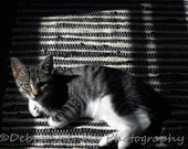 LAZY KITTEN Fine Art Print Digital Download - UniqueCozyTreasures