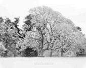 Take the ground away 8x12 fine art photo, trees, snow, winter, Narnia