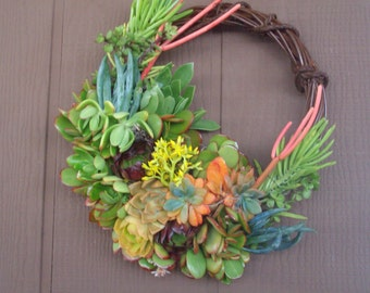Independence Day 14 inch willow branches living wreath of succulent plants