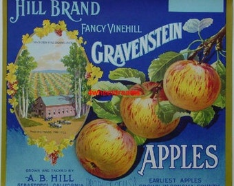 1920s A B Hill Gravenstein Scarce Apple Crate Label Sebastopol CA