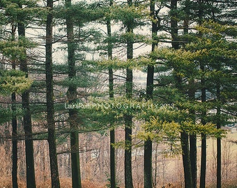 """Tree Photograph, Tree Photography, Nature, Landscape Photograph,  Affordable Home Decor, Fine Art Photography, 8X10 or 8x8 -""""EVERGREEN"""""""