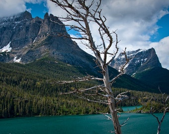 Barren Tree with Mountain Range and Lake Sherburne at Glacier National Park in Montana No.3040 - A Fine Art Landscape Photograph