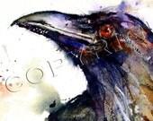 RAVEN Watercolor Greeting Card 6-Pak