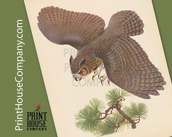 Bird, Vintage Great Horned Owl Print, by Athos Menaboni, Natural history bird art, Ornithology