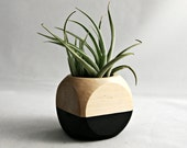 Mini Air Plant Cube Planter With Tillandsia Leonamiana // Black - Natural Wood