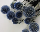 "Dried Globe Thistle -- set of 8  -- Preserved  -- 4"" long"