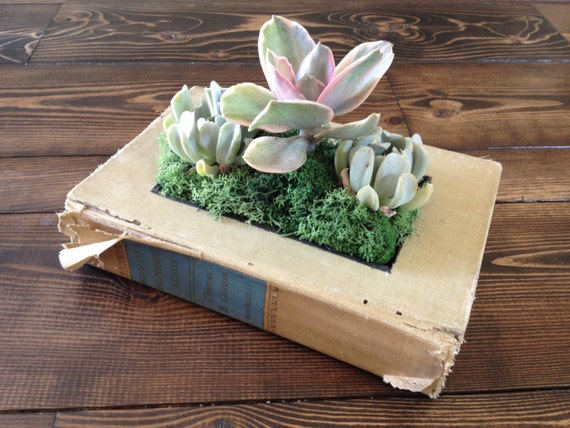 Upcycled Book Planter for Succulents or Flowers