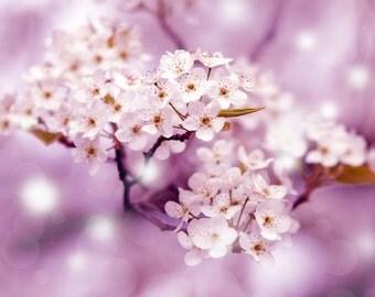nature photography, flower, still life, pear blossom, minimalist, pink, magenta, zen, dreamy, nursery,  kids, wall art, girls room 11x14