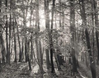 autumn sunshine, 8x10 fine art black & white photograph, nature