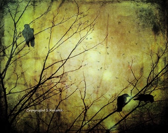 Crow Photography Goth Crows Forest Branches Surreal Black Bird Photograph Deep Sepia Black 8x10