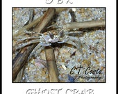 Outer Banks Ghost Crab, OBX photography, OBX Art Print, 8x8 inch, Beach house wall art