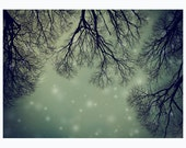 Tree branches photography - dramatic, starry sky in the night, snow - Alien Invader Trees - 5x7 print