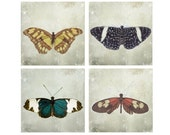 Butterfly Photography - Float Like a Butterfly - Butterfly photograph set, 4 8x8s