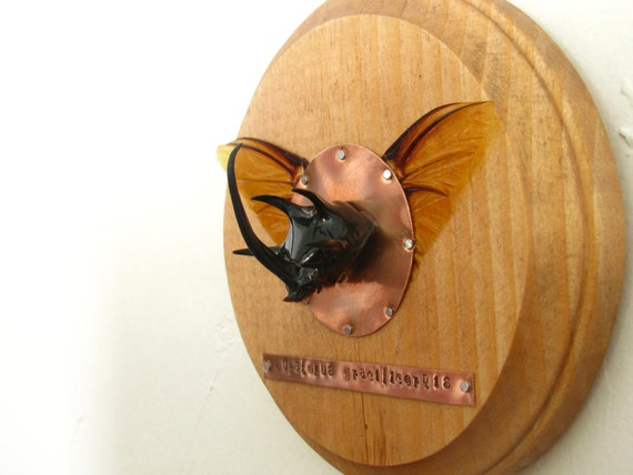 rhinoceros beetle susan hawthorne