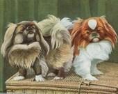 Pekingese Dogs - 1910s - Louis Agassiz Fuertes art print