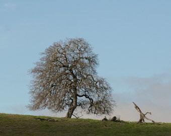 Lovely Tree: 5 x 7 photograph CHARITY DONATION