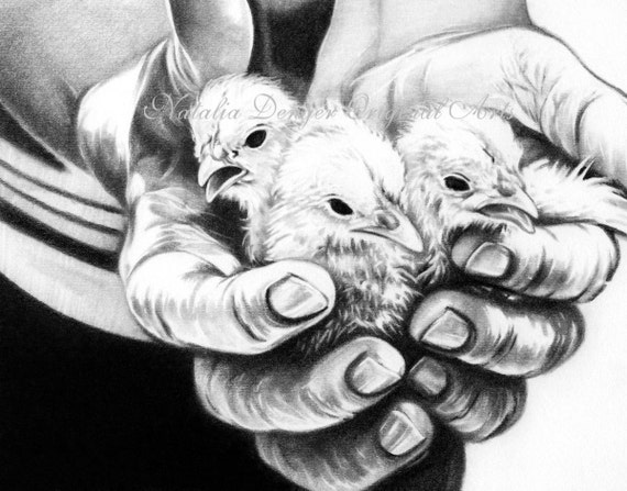Paper Print Chickens Pencil Drawing Animal Black White