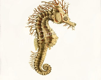 Antique Sea Horse Art Print - 5x7 - Hippocampus