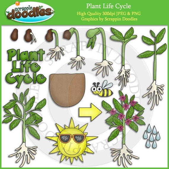 Cec Cadb E Bd in addition Acbf A D B E D E D C additionally Answer Picture Sequencing Boy Dressing Up besides Plant Life Cycle Activities Worksheets additionally C Fcdfec F Ae Ad Fe C B. on kindergarten plant sequencing