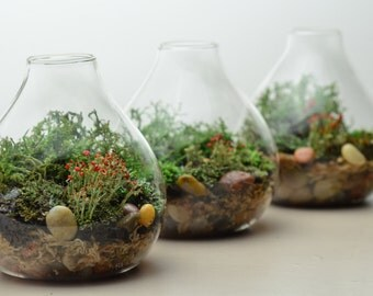 Lichen Terrarium // Forest // Teardrop Vase // Home And Living //